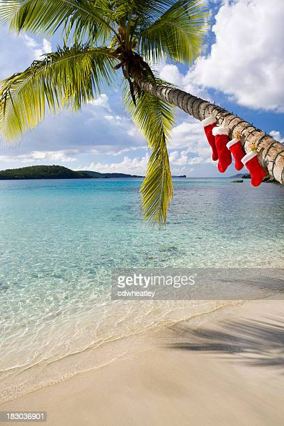 christmas palm tree on a caribbean beach - caribbean christmas stock pictures, royalty-free photos & images