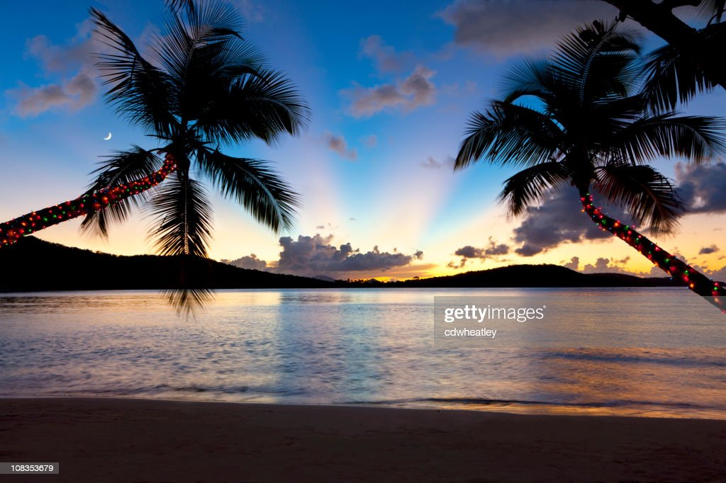 Christmas Palm Trees At Sunset On A Caribbean Beach Stock Photo