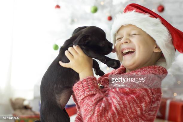 christmas pet adoption - americas next top dog stock pictures, royalty-free photos & images