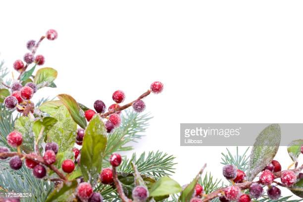 christmas pine and berries (xxl) - needle plant part stock photos and pictures