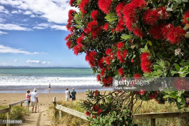 christmas pohutukawa at taipa bay in northland in new zealand's north island - summer stock pictures, royalty-free photos & images