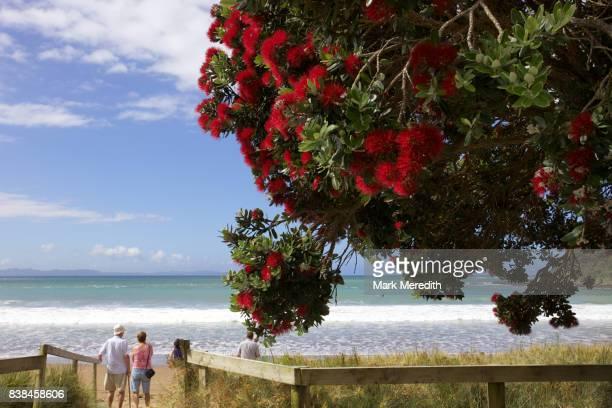 Christmas pohutukawa at Taipa Bay, Northland