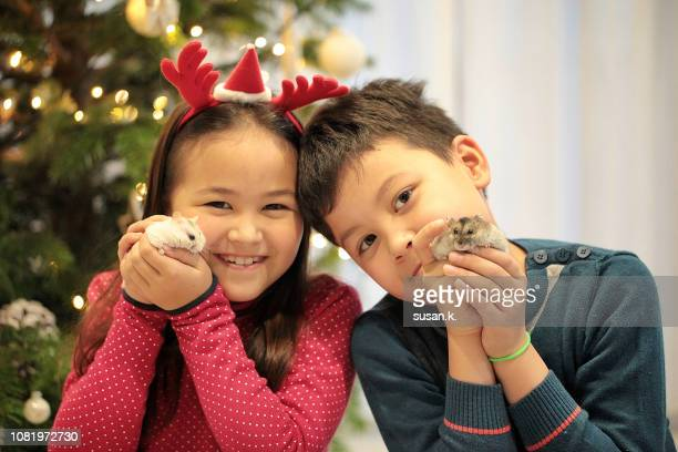 christmas portrait of sibling with their pet hamster at home. - koper stock photos and pictures