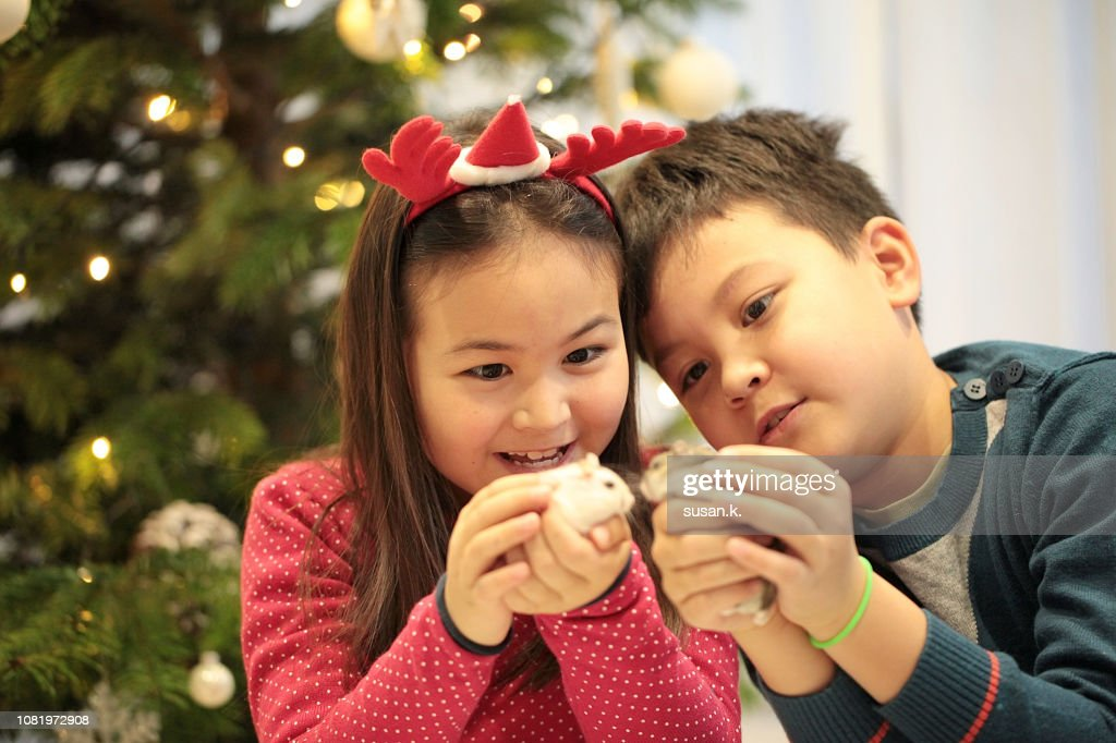 Christmas portrait of sibling with their pet hamster at home. : Stock Photo