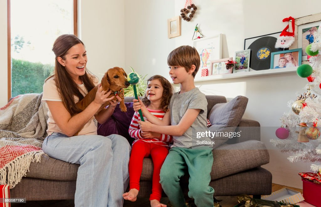 Christmas Present for their Pet Dog : Stock Photo