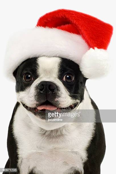 Christmas Puppy 2