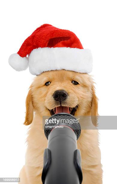 christmas puppy caroler - christmas dog stock pictures, royalty-free photos & images