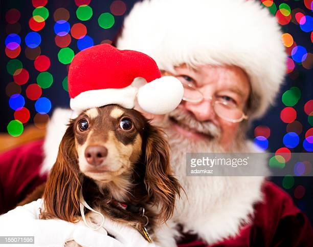 christmas puppy - santa stock photos and pictures