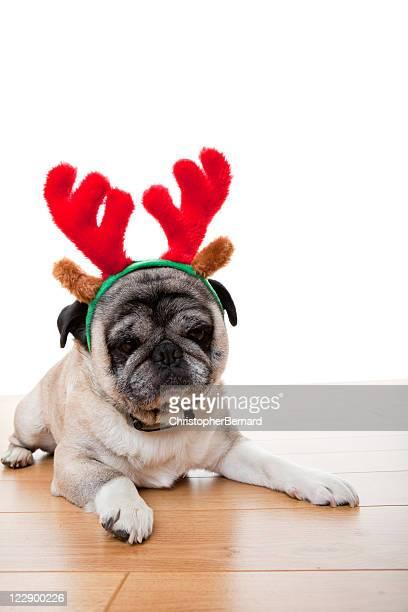 Christmas Reindeer Pug