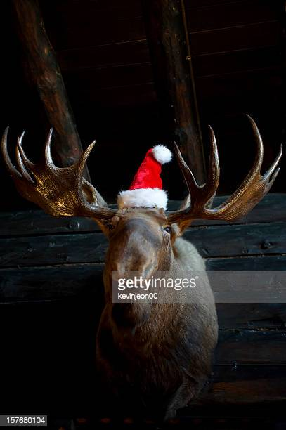 christmas reindeer with santa hat - dead deer stock photos and pictures