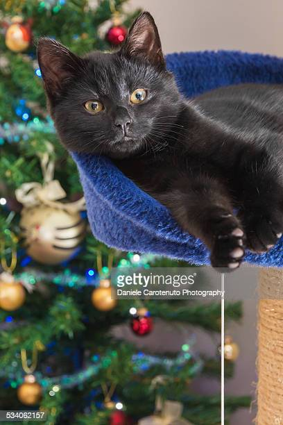 christmas relax - daniele carotenuto stock pictures, royalty-free photos & images