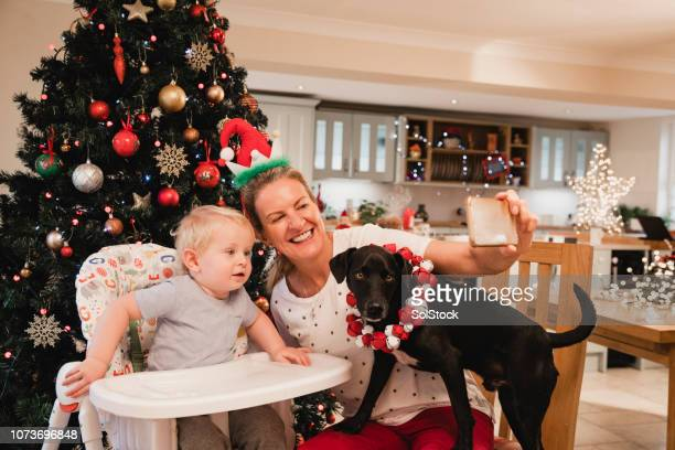 christmas selfie with the dogs - terrier stock pictures, royalty-free photos & images