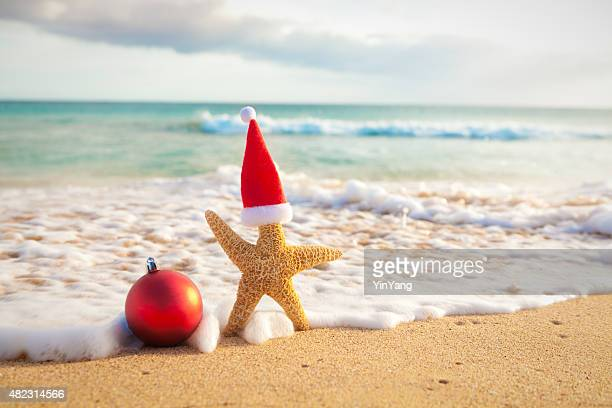 christmas starfish santa claus on tropical beach vacation in hawaii - hawaii christmas stock pictures, royalty-free photos & images
