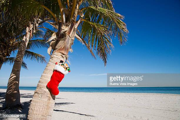 christmas stocking with gifts hanging from palm tree - florida christmas stock pictures, royalty-free photos & images