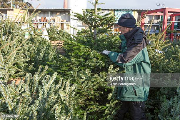 Christmas the agony of choice What is the right Christmas tree
