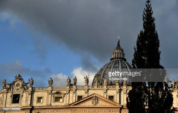 A Christmas Tree a spruce from the Friuli Venezia Giulia region stands at St Peter's Square in The Vatican on November 22 2018