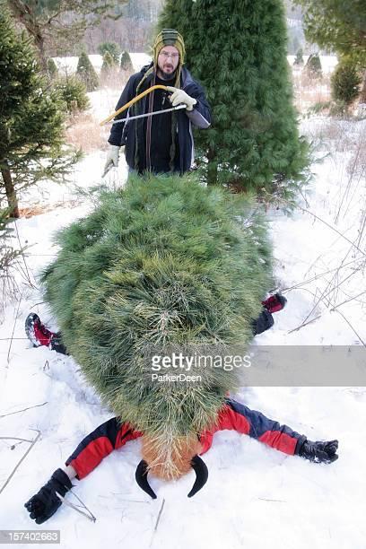 arbre de noël accident - sapin de noel humour photos et images de collection