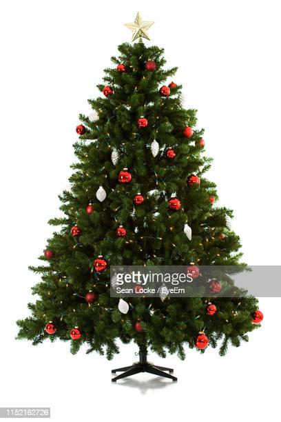 christmas tree against white background - christmas trees stock pictures, royalty-free photos & images