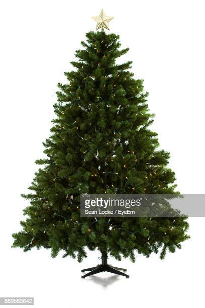christmas tree against white background - christmas tree stock pictures, royalty-free photos & images