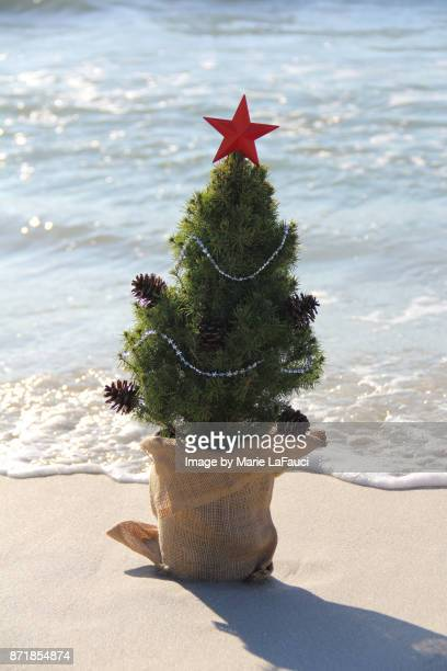 christmas tree along the water's edge at the beach - marie lafauci stock pictures, royalty-free photos & images