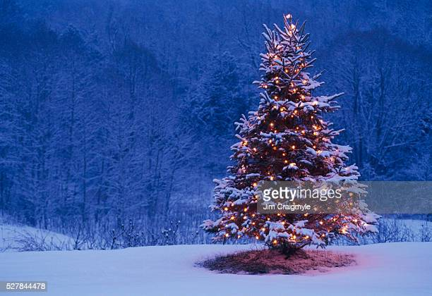 Christmas Tree and Forest
