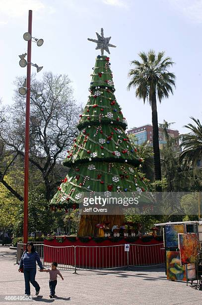 Christmas tree and palm on the Plaza de Aramas in Santiago Chile