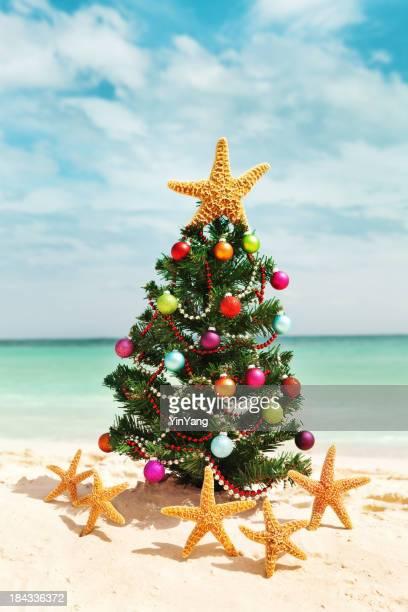 Christmas Tree and Star Fish Winter Vacation on Caribbean Beach