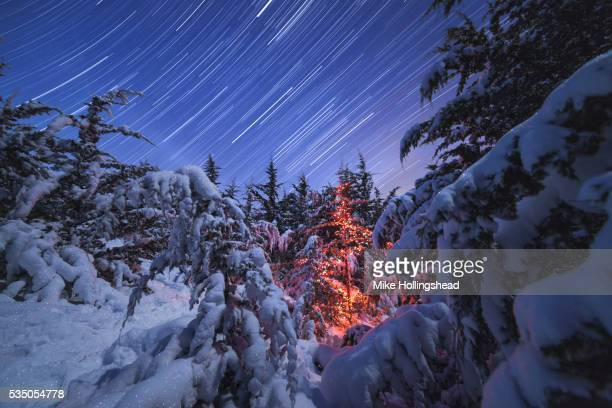 Christmas Tree and Star Trails