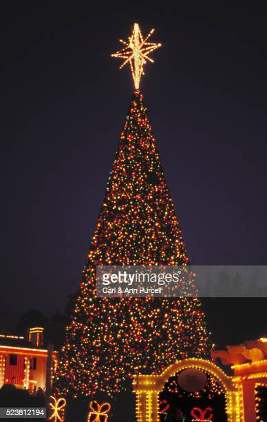 christmas tree at cypress gardens - celebration fl stock pictures, royalty-free photos & images