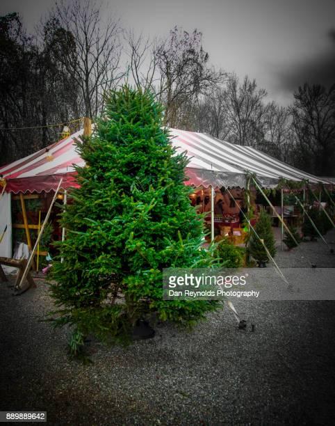 Christmas Tree at Market