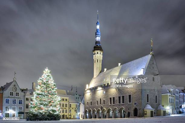 TOWN TALLINN HARJUMAA ESTONIA Christmas tree at Tallinn's Town Hall Square