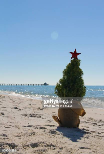 christmas tree at the beach with pier in background - marie lafauci stock pictures, royalty-free photos & images