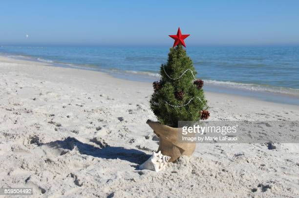 christmas tree at the beach with seashell - marie lafauci stock pictures, royalty-free photos & images