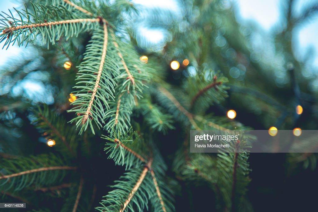 Christmas tree background : Foto de stock