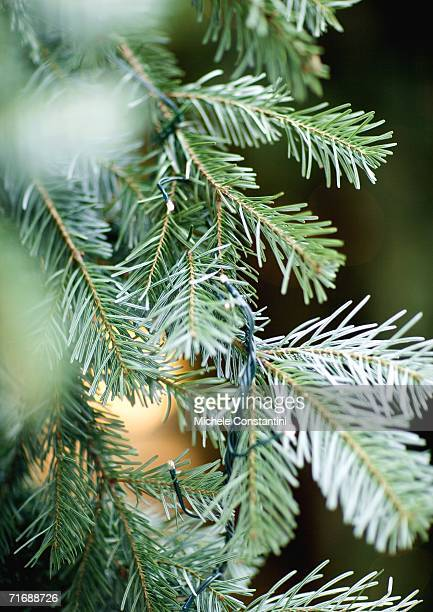 christmas tree, close-up - needle plant part stock photos and pictures