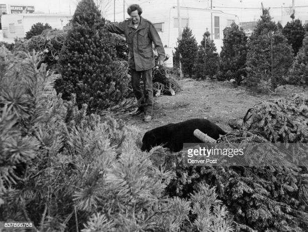 Christmas Tree Coming to Market Bob Brownlee looks over Christmas trees in his lot at East Evans Avenue and South Hudson Street in Denver He and...