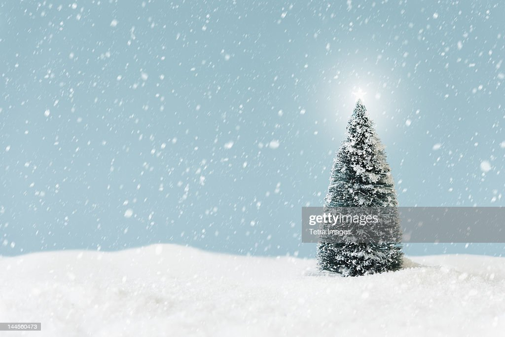 Christmas tree covering by snow, studio shot : Stock Photo