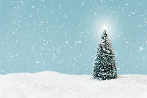 Christmas tree covering by snow, studio shot - gettyimageskorea