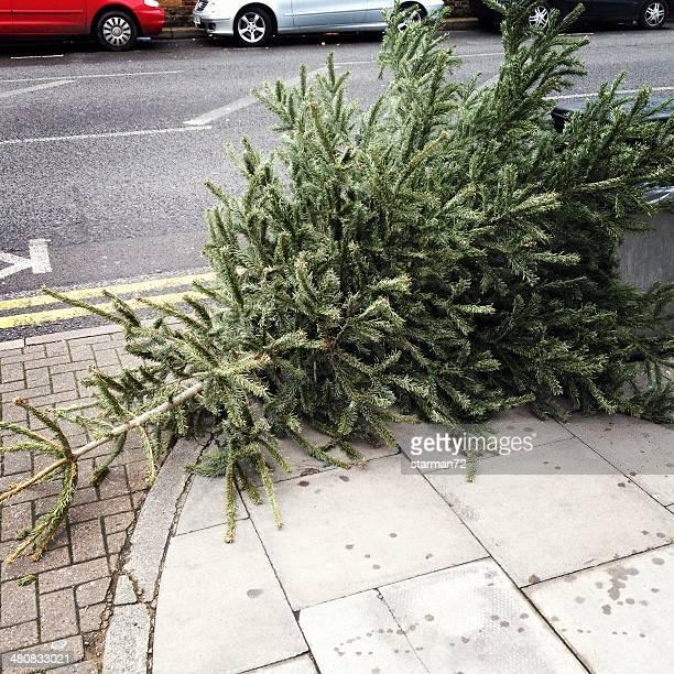 Christmas tree discarded on street, London, England, UK