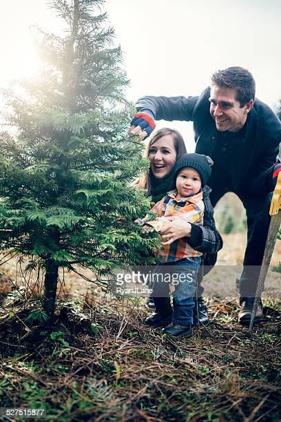 christmas tree family at tree farm - christmas tree farm stock pictures, royalty-free photos & images