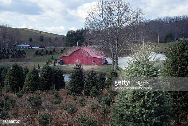christmas tree farm with red building - southern christmas stock pictures, royalty-free photos & images