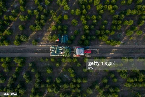albero di natale agricoltura - topix 1getty marketing term foto e immagini stock