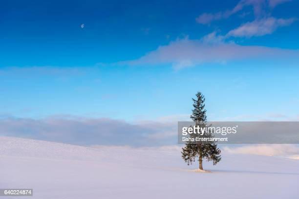 Christmas tree from Biei,Hokkaido