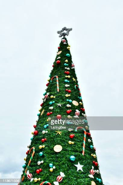 ロトルアセントラルビジネスディストリクトのクリスマスツリー、たくさんの湾、ニュージーランド