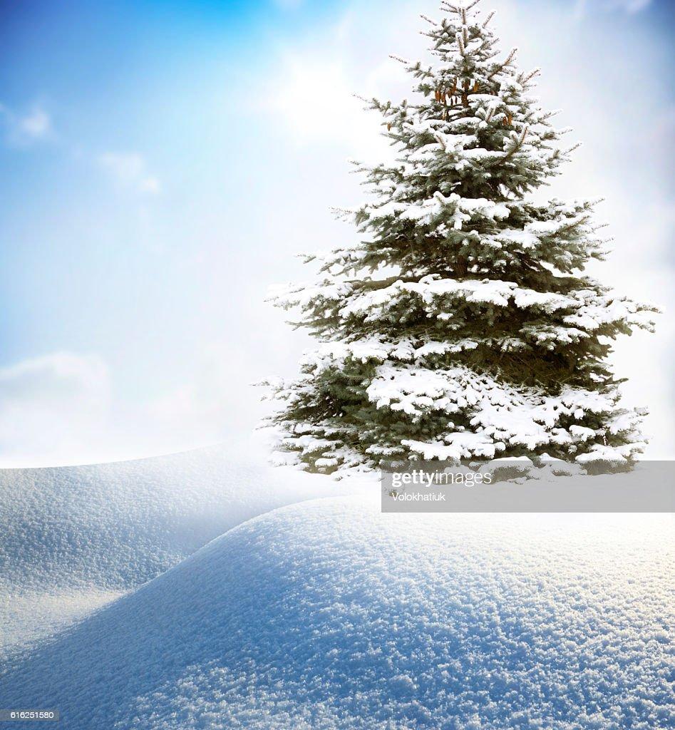 Árvore de Natal na Neve : Foto de stock