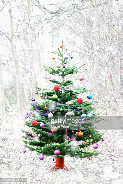 Christmas tree in snowy landscape