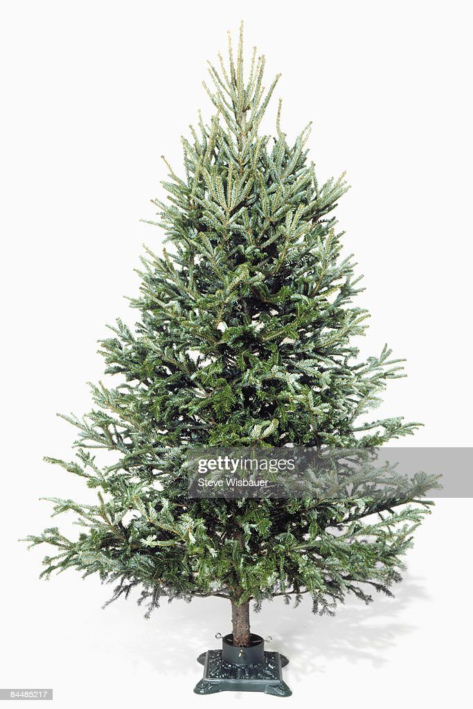 Christmas tree in stand without decorations : Stock Photo