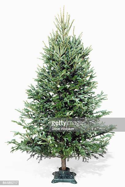 Christmas tree in stand without decorations