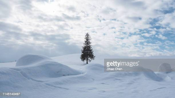 christmas tree in the snowfield - snowfield stock pictures, royalty-free photos & images