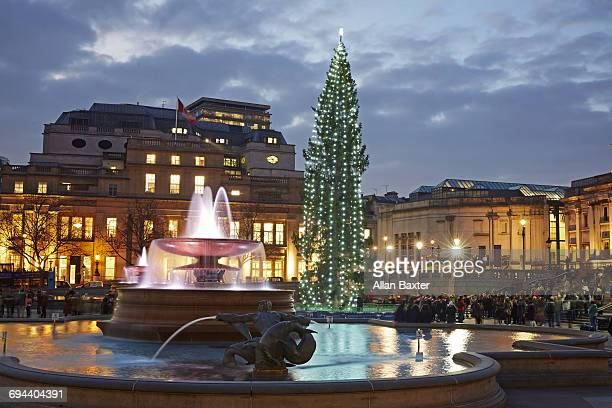 christmas tree in trafalger square at dusk - trafalgar square stock pictures, royalty-free photos & images